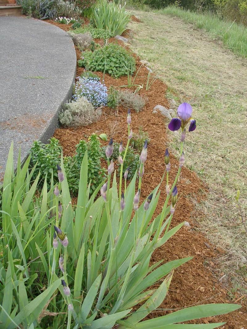 Gardenmulchedw